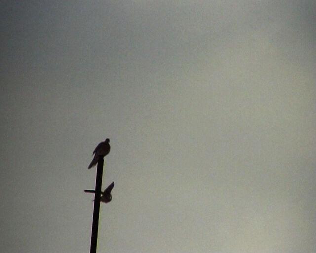 Slippage, Ali Cherri, Lebanon, 2007, 12min